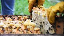 Türk balı geçen yıl 52 ülkede ağızları tatlandırdı